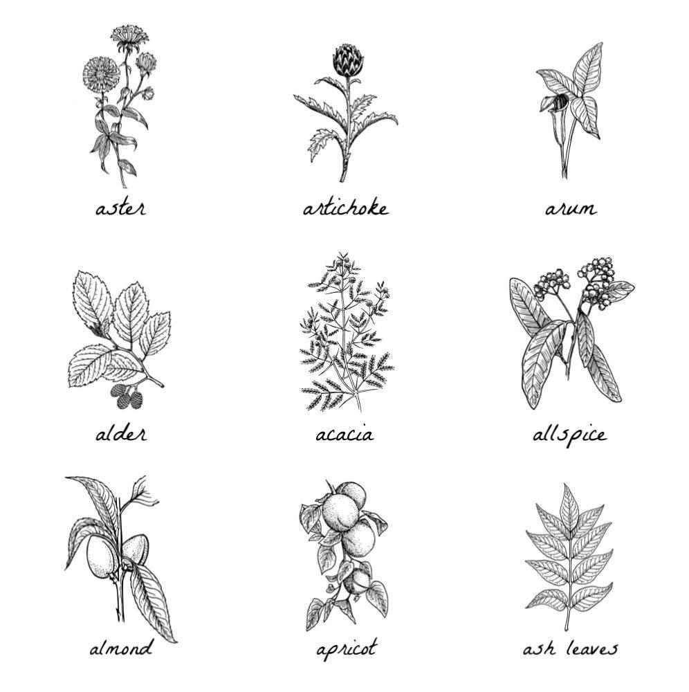Free Botanical Prints Taryn Whiteaker