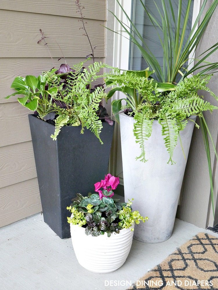 Modern contemporary planters for front porch with tropical flowers