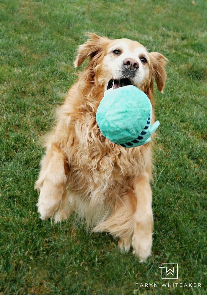 Bark Box - Pet Subscription Service