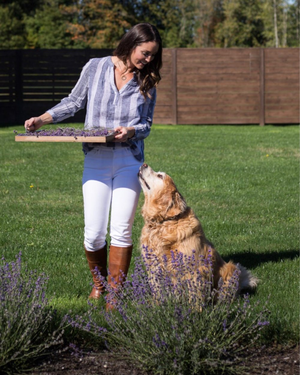Pruning fresh lavender in the fall with sweet golden retriever by my side.