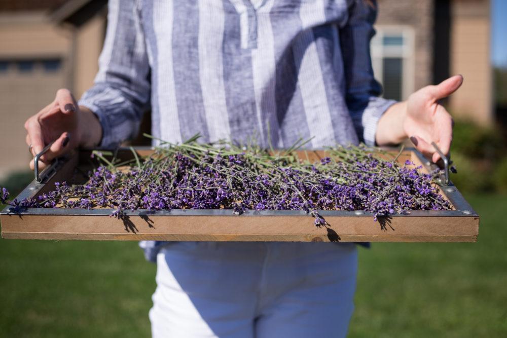 Fresh lavender.